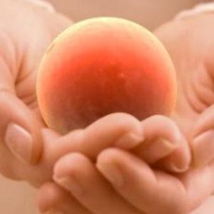donacion de ovulos en mexico