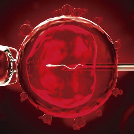 donación de óvulos en méxico