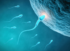 Prueba de fertilidad masculina