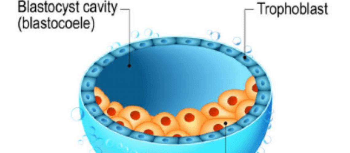por-que-tus-embriones-no-llegan-a-convertirse-en-blastocitos
